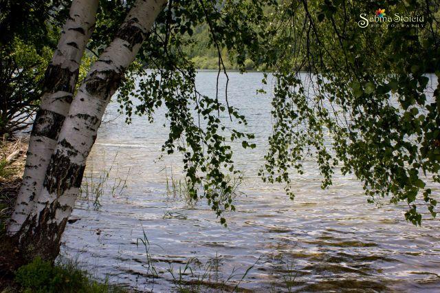 Valea de Pesti printre copaci