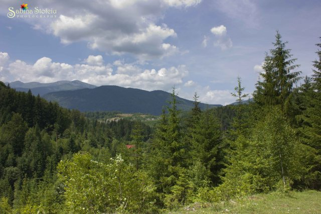 Valea de Pesti munti
