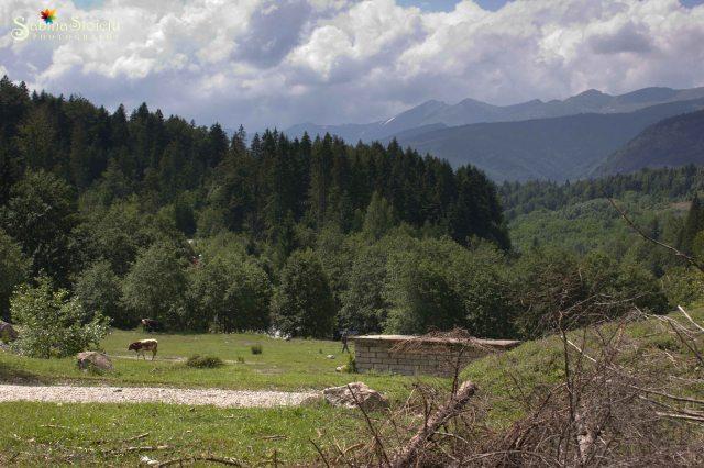 Valea de Pesti peisaj